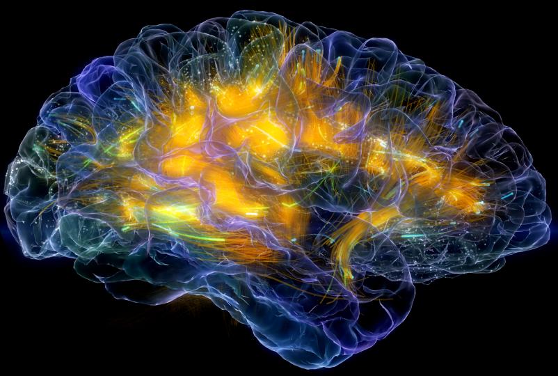 Header Glass Brain
